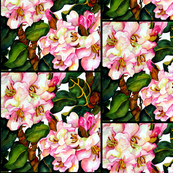 Pink Rhodies Small Scale