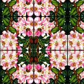 Pink Rhodies Abstract design