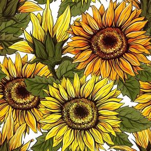 Sunflowers field seamless vector