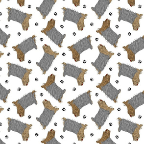 Trotting Yorkshire Terriers and paw prints - white