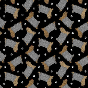Trotting Yorkshire Terriers and paw prints - black