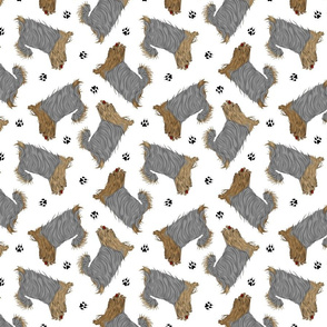 Trotting undocked Yorkshire Terriers and paw prints - white