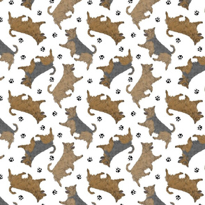 Trotting undocked Australian Terriers and paw prints - white