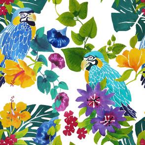 Parrots forest_RM085