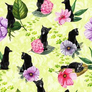 Cats (fresh green)