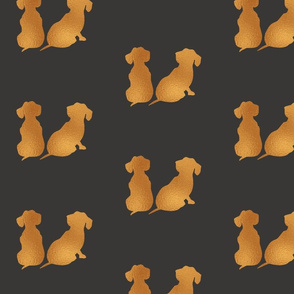 Gold Dachshunds Large