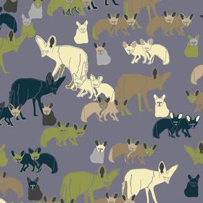sludgy bat-eared fox