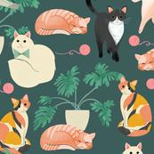 Cats - Turq