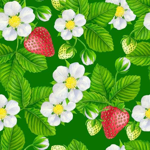 Strawberry garden on green