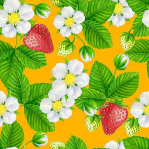 Strawberry garden on orange