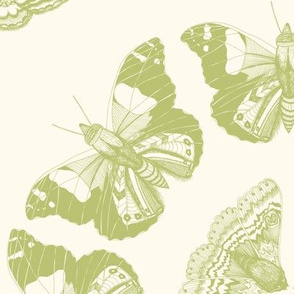 Moth Mandala Green