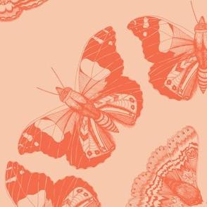 Moth Mandalas Orange