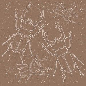 spotty stag beetles