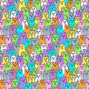 kitten kaboodle-rainbow