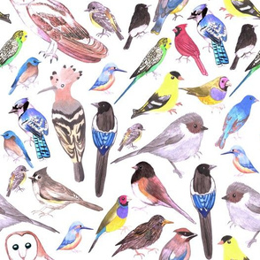 Various watercolor birds- goldfinch, bushtit,  cedar waxwing, black billed magpies, barn owl, budgerigar or budgies, black phoebe, kingfisher, gouldian finch,