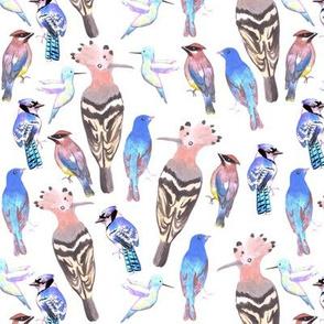 Hoopoe, indigo bunting, blue jays, cedar waxwing, hummingbird, birds in tetrad color scheme