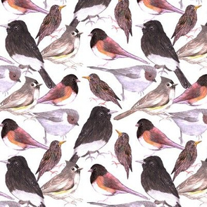 Starlings, juncos, titmouse, black phoebe, bushtits, Birds in warm color scheme