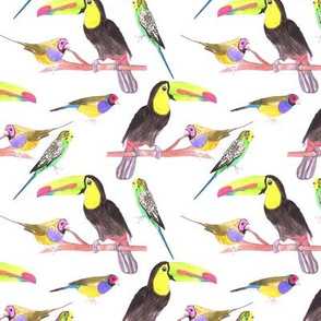 Toucan, budgerigar, gouldian finch, colorful watercolor birds