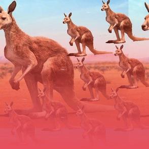 kangaroo army