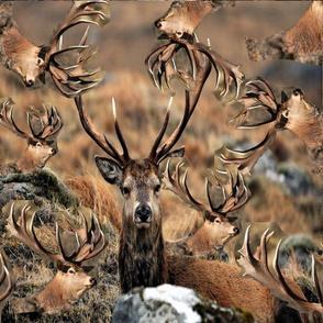 deer pattern print