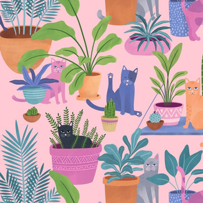 Indoor cats paradise