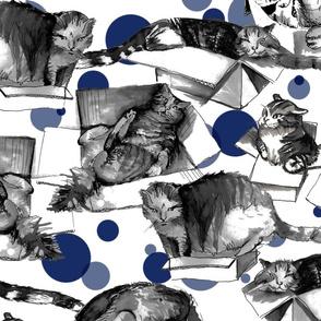 Cats are liquid - pet's fantasy