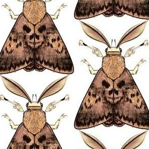 Big Brown Skull Moth