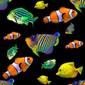 fish pool pattern