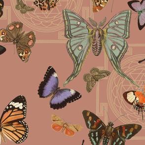 Yogi Moths Adobe