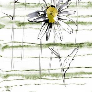Delicate chamomile