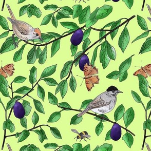 Plum tree with black cap birds and butterflies