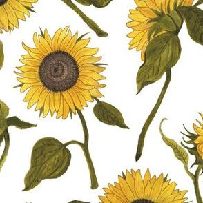 Sunflower White Large