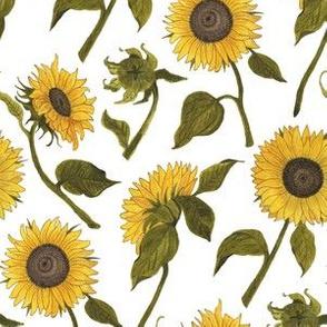 Sunflower White Medium
