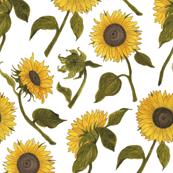 Sunflower White Small