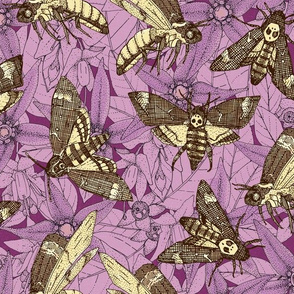 Death's-head hawkmoth purple