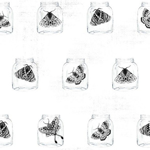 Moths in the Jars V03