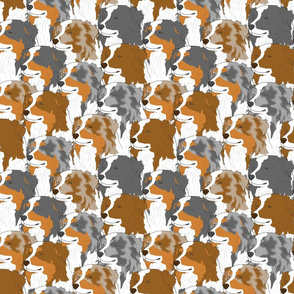 Australian Shepherd portrait pack