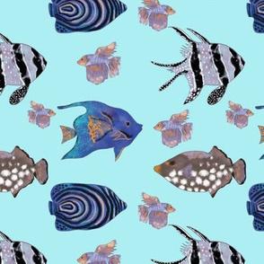 Aqua exotic blue fish