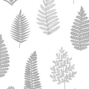Neutral Grey Ferns