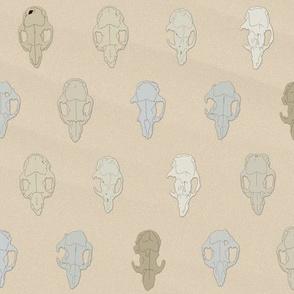 Weathered skulls (small animal)