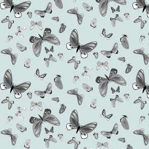 small - moths in black and white on light blue