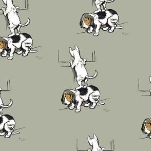 Dog_cat-1