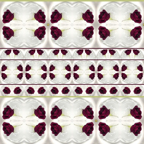 blood roses in ice burgundy stripes large size