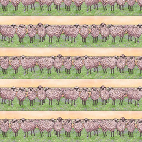 sunrise sheep stripe