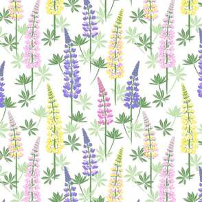 Lupine Fields white yellow medium
