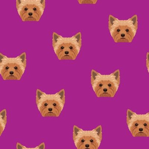 Yorkie Yorkshire Terrier Dog Purple
