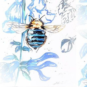 Blue Banded Bee in Salvias