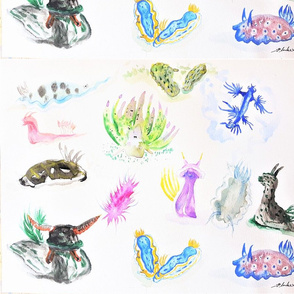 World of Nudibranches