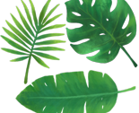 Tropicalleaves_thumb