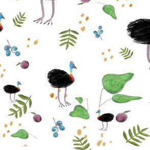Cassowary Jungle